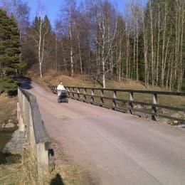 小松鼠和媽媽散步的地方就在家旁邊的森林。