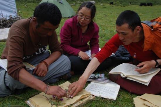 普哇傑、年木、格爾托一起整理標本(從左到右)﹣孫敏攝