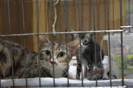 等待被領養的貓母子