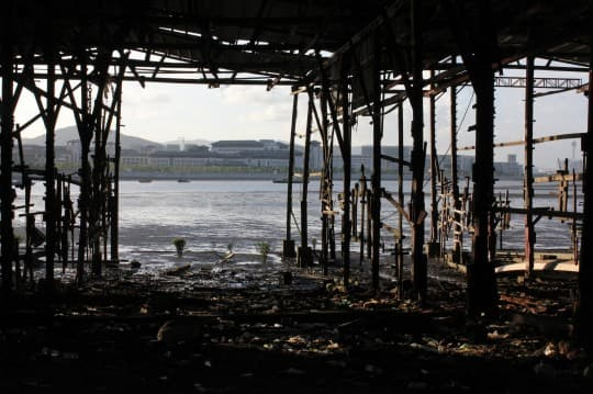 舊船廠一帶流浪狗數目已大幅減少