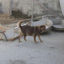 被捕獸器夾斷腳的地盤狗
