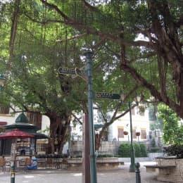 亞婆井的老榕樹