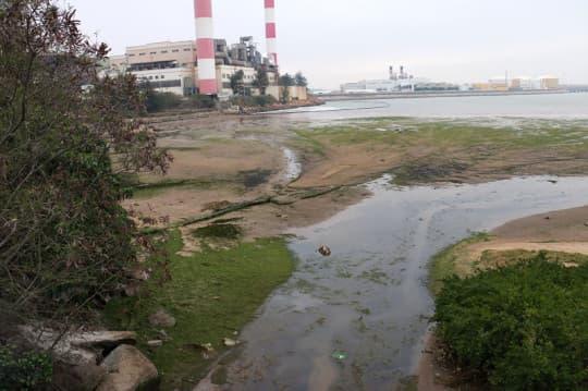 今日,九澳發電廠外海邊已經不見疑似「紅潮」的物質。