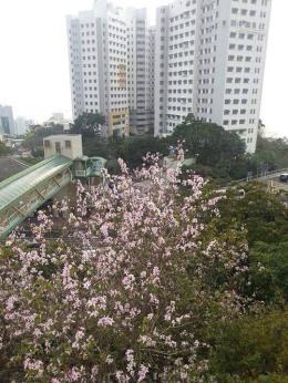 今年三月在香港治療期間拍下的瑪麗醫院景觀