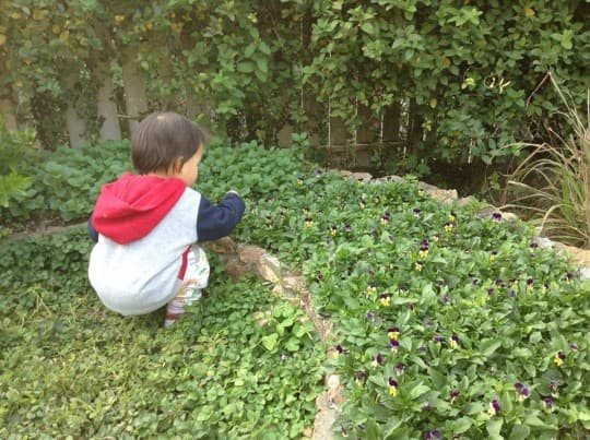 蔬菜園裡,可以看到動植物的互動