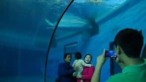 海生館目前僅存三隻小白鯨,僅成為遊客們拍照背景獵奇的存在,館方對於白鯨的相關知識和教育設計仍待加強!(黑潮海洋文教基金會提供)