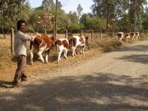與村民一同放牛去,我們都是地球村的一分子
