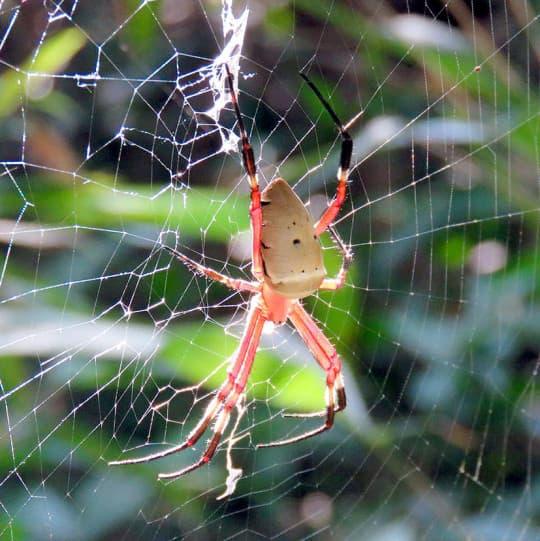 我們組的秘密花園裡有很多各式各樣的蜘蛛網。