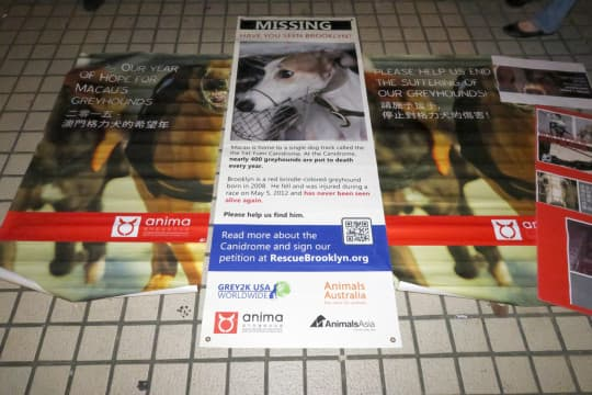 地上亦放置標語,以及寫有被殺狗隻名字的海報。