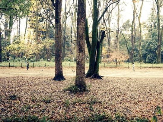 在神社前的樹林踢球的男孩