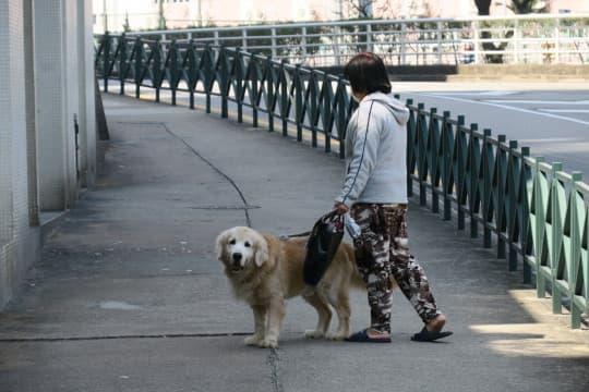 一常會早前建議狗隻出街一律戴口罩,引起不少爭議,最終民署決定不採納建議。但大狗是否一定要戴口罩,社會仍然未有共識。