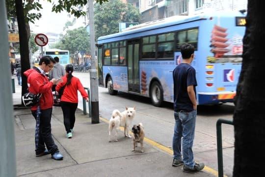 不少市民感慨,帶狗出街不准上巴士,的士又拒載,電單車載又話危險駕駛違例,如果有急事如睇醫生會好麻煩。