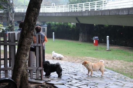 全澳現時有12個「遛狗區」,澳門8個,氹仔4個。