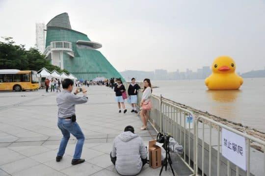 環遊世界的「黃色小鴨」來到澳門