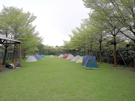 九澳營地有一塊大草地,兩旁種滿小葉欖仁樹,適合各種群體活動及觀星