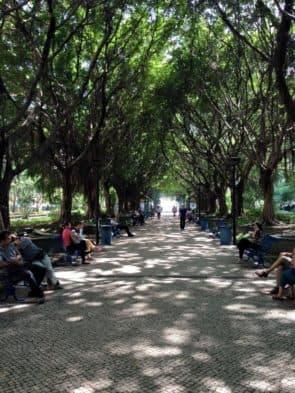 宋玉生公園內規劃良好,樹木才能長得那麼茂盛。