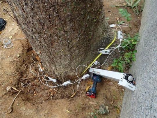 民署表示,使用儀器檢查幹基部近地面壞死處的木材顯示,厚約二十厘米的外圍木材(佔樹幹直徑約50%)及樹幹底部木材材質轉差,評估樹木有潛在倒塌危險故須要鋸除。(圖片:民政總署網頁)