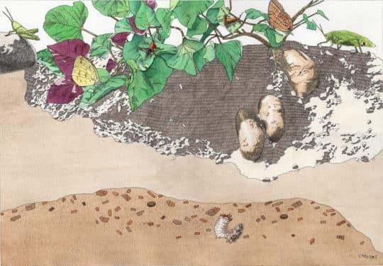 《地面地下》內頁插圖。