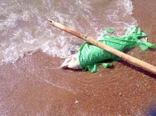 2015年竹灣連續2個月發現中華白海豚屍體 。(相片由讀者提供)