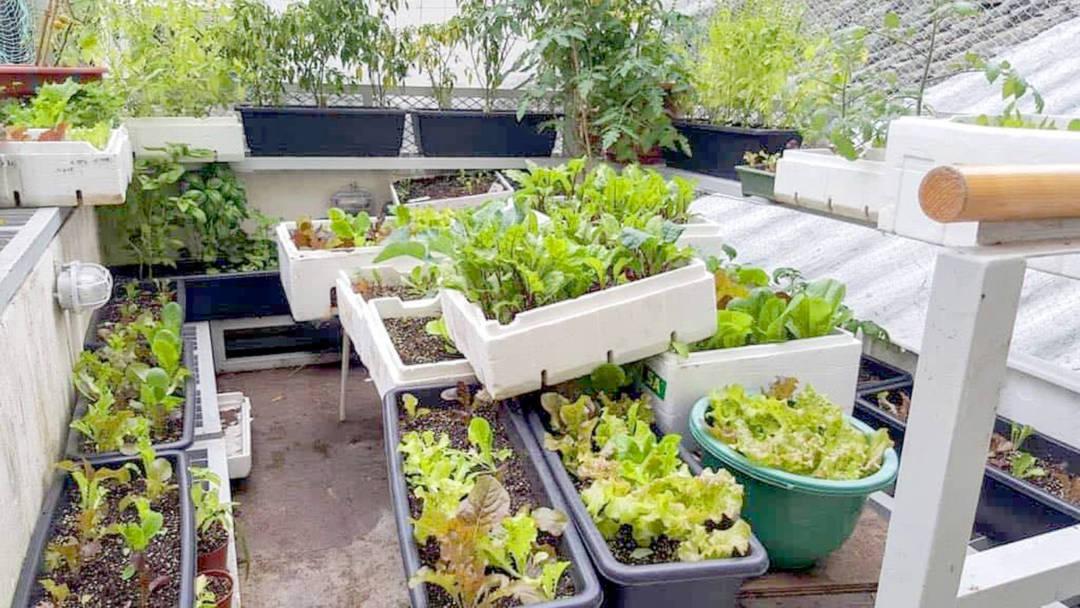 利用閒置空間、廢棄資源,種植可供市民食用的食物,是城市農業的可行途徑。
