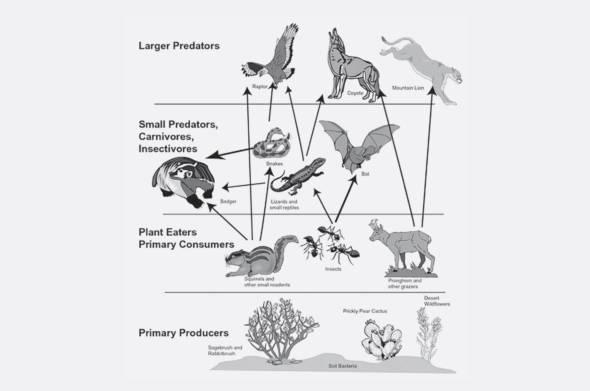生物多樣型是食物鏈穩定的重要條件。
