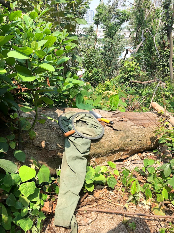 倒木對於很多生物都是棲息的場所。