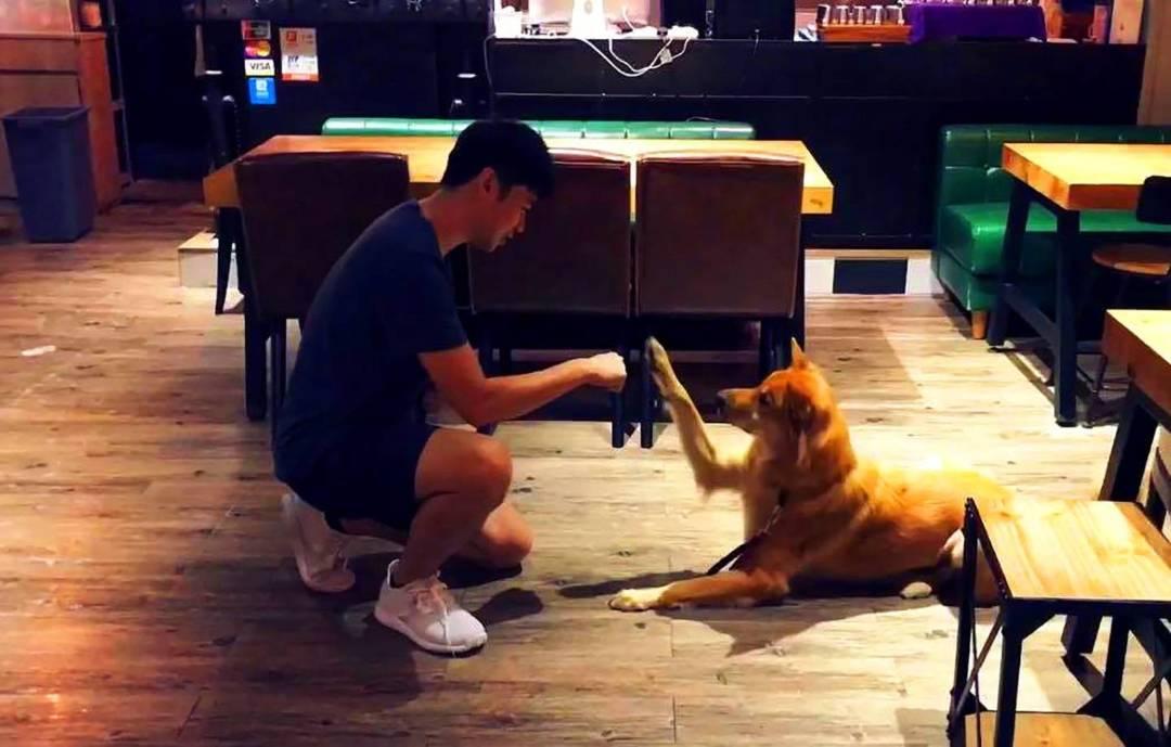 作為訓練師,包文俊當然也是愛狗之人,他自己亦養了兩隻狗,都是由收容所領養回來的,其中一隻就是訪問過程中,靜靜坐在一旁的唐狗Google。