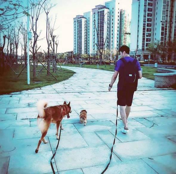 包文俊指,遇過有些客人以請教訓練方法為名,希望他說出「狗狗沒辦法再教好」這句說話,好讓自己安心送狗狗去安樂死。