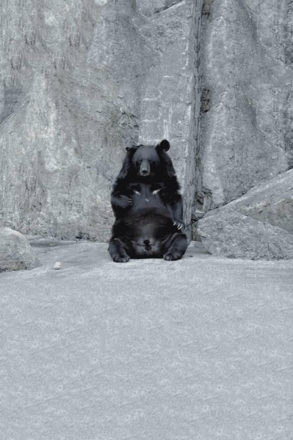 對於最近「Bobo遺體處理」爭議,「綠色生活」發起了這一次網絡調查,希望藉此了解公眾對於 Bobo遺體的處理態度,以及因此所引發出來對動物保育和權益、科普教育等問題的見解。