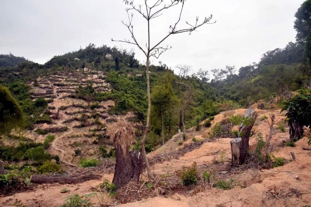 市政署由2019年11月開始第二期山林生態修復工作,修復路環步行徑約五公頃面積的山林,並計劃種植約五千株樹苗。