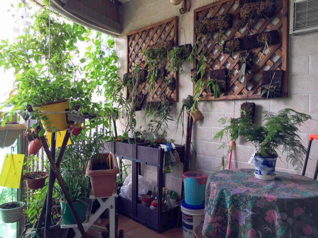 長滿植物的「鄺。琴語軒」。