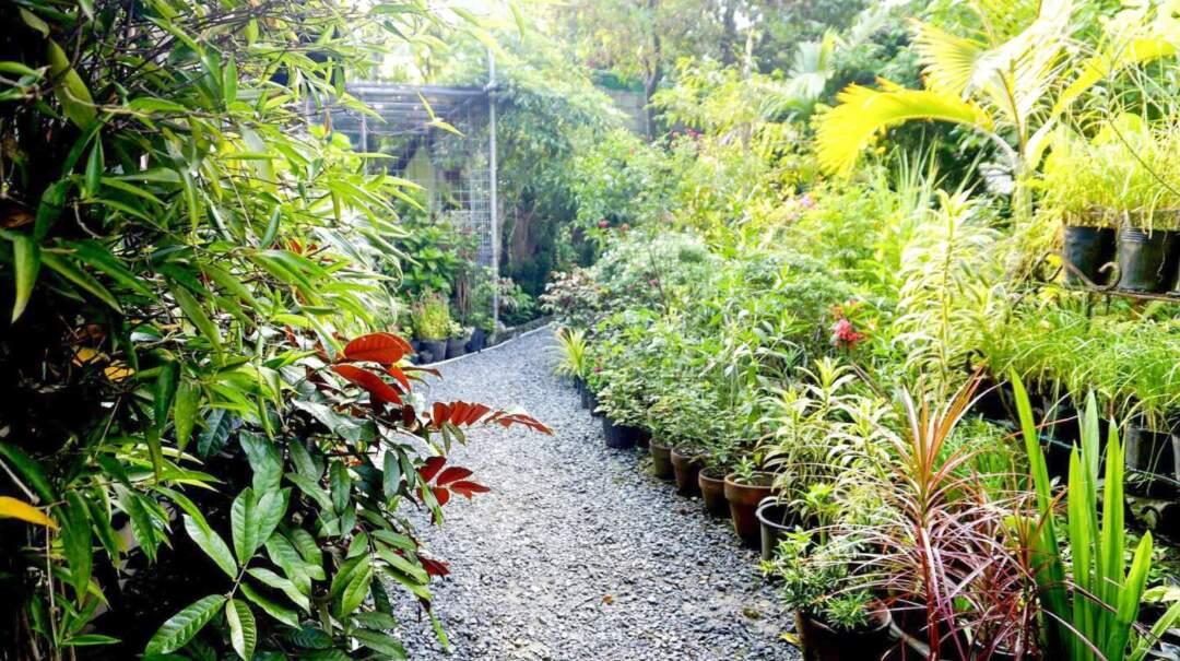 Jena在菲律賓的家有一個頗具規模的花園。