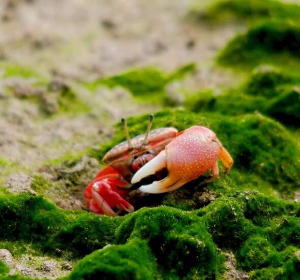 生態一區及二區的生態價值十分豐富,圖片來源:新聞局)