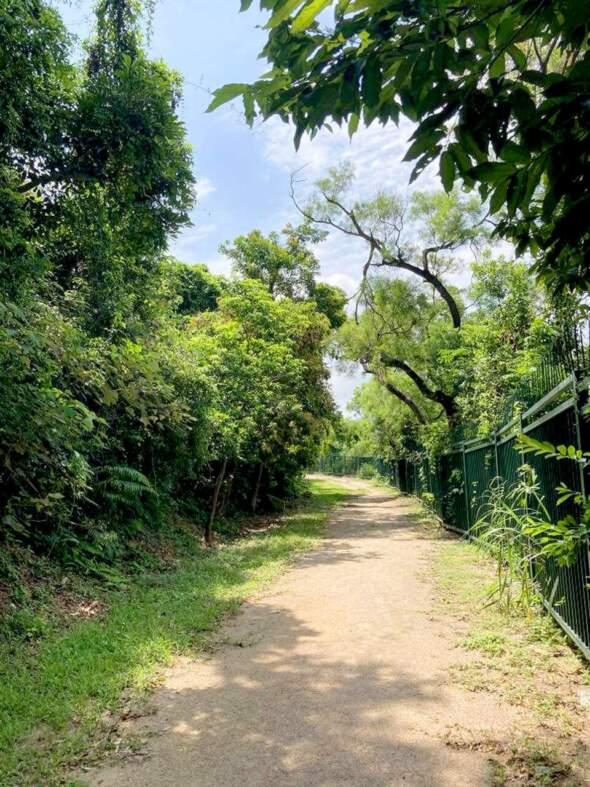 疊石塘住宅區上方的陸軍路兩旁草木茂盛。