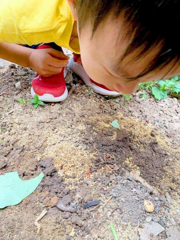 泥土裡大有看頭。